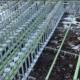SureBuilt Stud Rail for shear load transfer in concrete